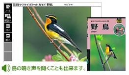 キクタン野鳥